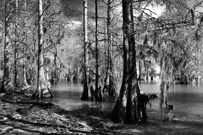 Photograph - Quiet Cypress Cove by Deborah Smith