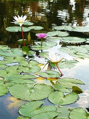 Photograph - Quiet Day At The Pond by Stephanie Callsen