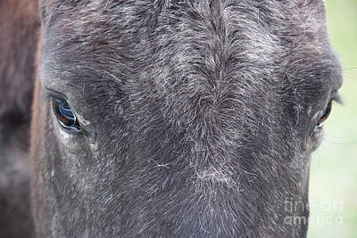 Photograph - Gentle Horse by Jackie Farnsworth