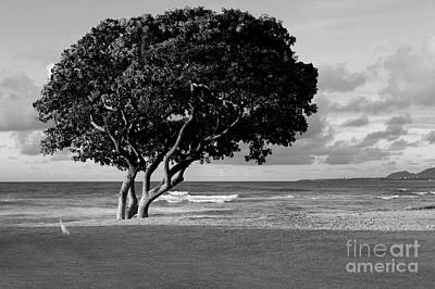 Quiet Kapaa Morning Art Print