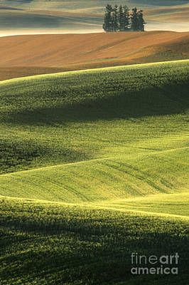 Photograph - Quiet Morning In The Palouse  by Sandra Bronstein