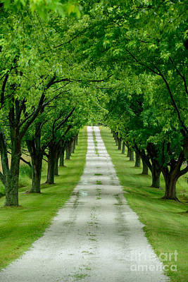 Quiet Path Between Trees Art Print by Don Landwehrle