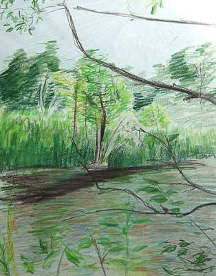 Drawing - Quiet Pond by Katerina Naumenko
