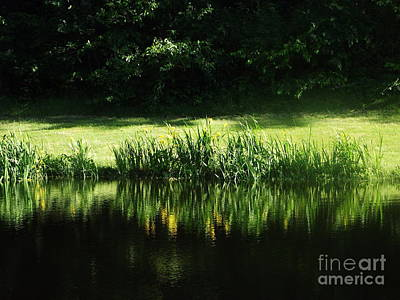 Photograph - Quiet Reflection by Michelle Welles