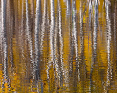 Fall Photograph - Quiet Reflections II by Chris Moore