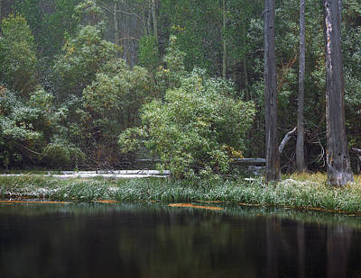 Photograph - Quiet Time Along Rush Creek by Paul Breitkreuz