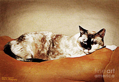 Photograph - Kitty Time by Bobbee Rickard