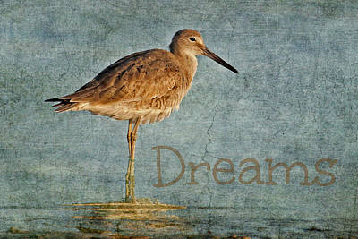 Photograph - Dreams by HH Photography of Florida