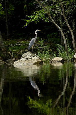Photograph - Quiet Waters by Brent L Ander
