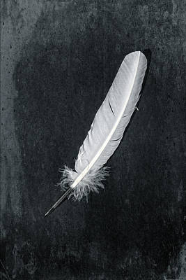 Edwardian Photograph - Quill by Joana Kruse