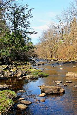 Photograph - Quinapoxet River In Spring by Michael Saunders