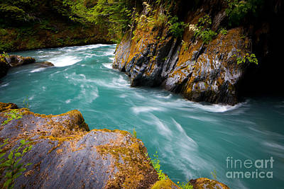 Olympic National Park Photograph - Quinault River Bend by Inge Johnsson