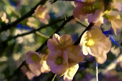 Quince Blossoms Art Print by John K Woodruff