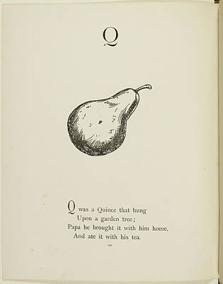 Edition Photograph - Quince by British Library