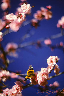 Photograph - Quintessential Spring by George Tuffy