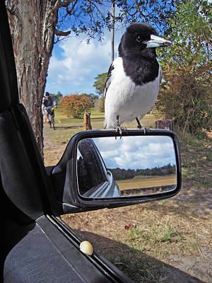 Photograph - Quirky Birdscape by Ankya Klay