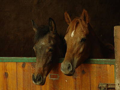 Livery Stable Photograph - Quite The Pair by Marc Mesa