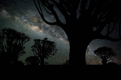Photograph - Quiver Trees And The Milky Way by Wolfgang steiner