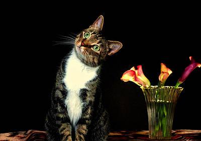Quizzical Cat Art Print by Linda Mcfarland