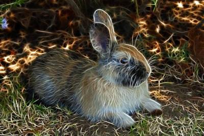 Painting - Rabbit 4253 - James Ahn by James Ahn