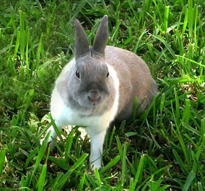 Outdoor Photograph - Rabbit A Beautiful Animal by Mario Perez