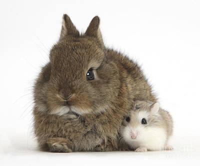 Hamster Baby Photograph - Rabbit And Roborovski Hamster by Mark Taylor