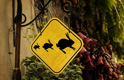 Photograph - Rabbit Crossing by Phil Cardamone
