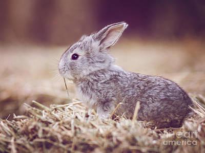 Rabbit Print by Diana Kraleva