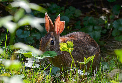 Photograph - Rabbit Ears by Michael Hubley