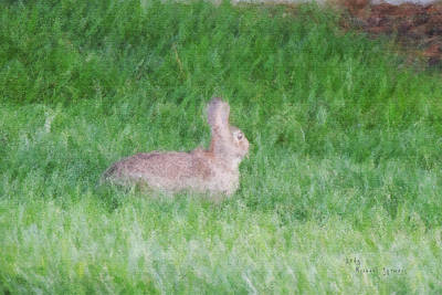 Digital Art - Rabbit In The Grass by Michael Stowers