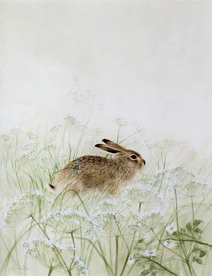 Cow Parsley Wall Art - Photograph - Rabbit by Jane Neville