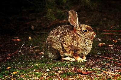 Photograph - Rabbit  by Marjorie Imbeau