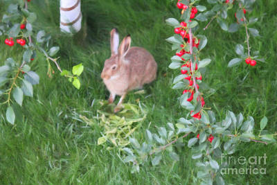 Digital Art - Rabbit Retreat by Donna L Munro