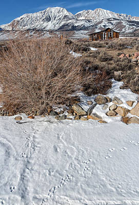 Snowy Mountain Loop Photograph - Rabbit Tracks by Kathleen Bishop