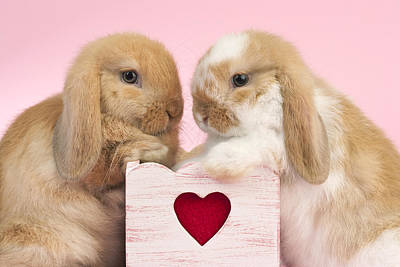 Photograph - Rabbits And Heart by Greg Cuddiford