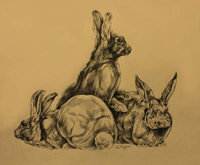 Rabbits Original