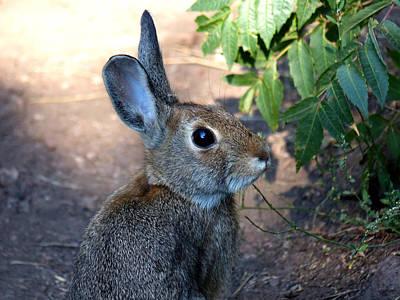 Photograph - Rabbits Eye View by Thomas Samida