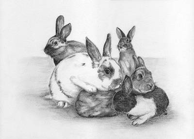 Drawing - Rabbits Rabbits And More Rabbits by Nan Wright