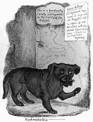 Photograph - Rabies Cartoon, C1890 by Granger