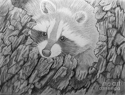 Drawing - Raccoon 2 by Peggy Miller