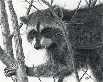 Drawing - Raccoon - Charcoal Experiment by Joshua Martin