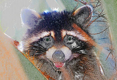 Raccoon Digital Art - Raccoon Face by David Lee Thompson