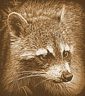Photograph - Raccoon In Sepia 1 by Sheri McLeroy
