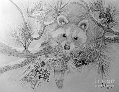 Drawing - Raccoon by Peggy Miller