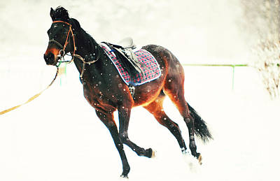 Race In The Snow 5 Art Print