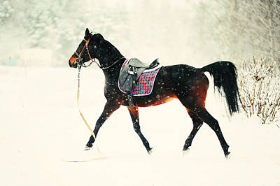 Impressionism Photos - Race in the Snow 8 by Jenny Rainbow