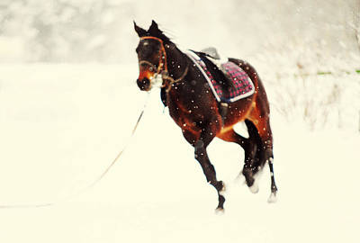 Race In The Snow I Art Print