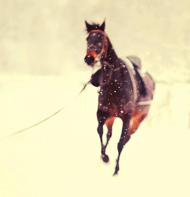 Horse Art Photograph - Race In The Snow by Jenny Rainbow