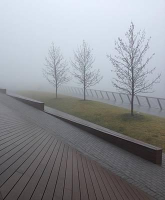 Race Street Pier's Trees Shrouded In Fog Original