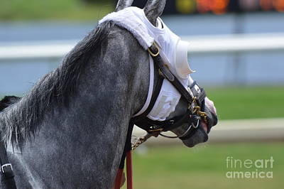 Photograph - Race Horse by Frederic BONNEAU Photography